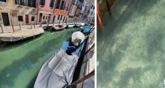 La quarantena ripulisce i canali di Venezia: senza turismo e barche a motore le acque tornano limpide