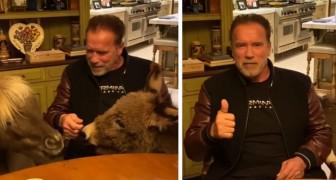 Anche Schwarzenegger si è messo in quarantena con i suoi animali, un asino e un mini cavallo: Restiamo a casa
