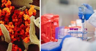 Le coronavirus n'a pas été créé en laboratoire : la réponse d'une recherche aux théories du complot et aux fake news