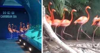 Das Aquarium wird wegen des Coronavirus geschlossen: Flamingos besuchen ihre Nachbarn