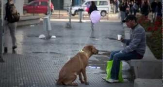 Um modo original e colorido para mostrar quantos cães de rua existem