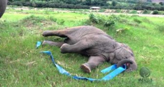 Ceux qui pensent que les animaux n'éprouvent pas d'émotion devraient voir cette vidéo...