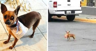 Un ragazzo in quarantena ha mandato la sua cagnolina a comprargli le patatine al negozio di fronte
