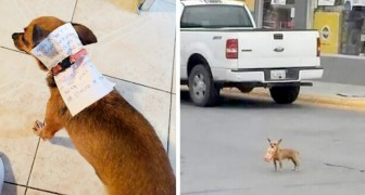 He cannot leave the house because of quarantine, so he sends his chihuahua on a mission to buy chips