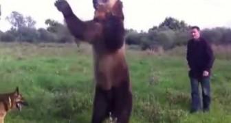 L'orso domestico