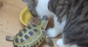 Personne ne peut échapper à la colère de la tortue guerrière!