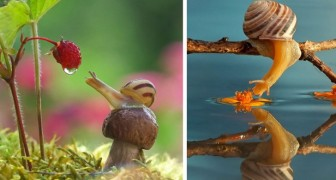 Slakken zijn bijzondere wezens: op deze foto's is de essentie van hun magische miniatuurwereld duidelijk