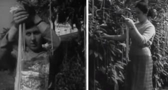 Nel 1957 la BBC fece credere a tutti che gli spaghetti crescono sugli alberi, in uno storico scherzo televisivo
