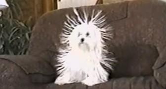 Sembra un normalissimo cane, ma a 0:20 vi farà morire dal ridere!