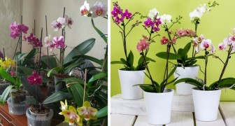 Orchids are wonderful indoor plants with a magical power: they purify the air and calm the nerves
