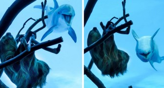 Das Aquarium ist wegen Covid geschlossen: Die Delphine sehen ein Faultier und können ihr Erstaunen nicht zurückhalten
