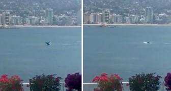Coronavirus: una balena nuota indisturbata sulle coste messicane in assenza di barche e navi in movimento