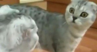 Het moment waarop deze kat beseft dat hij een kat is: wacht tot 0:15 zijn uitdrukking is hilarisch!