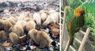 10 keer waarin de mens heeft laten zien dat hij geen respect heeft voor de natuur