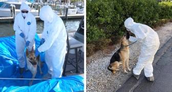El perro queda solo en el barco porque el patrón está internado por Covid-19: las autoridades logran salvarlo