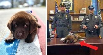 Deze schattige politiehond blijft slapen, zelfs tijdens zijn officiële eed