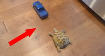 Who will win the exciting race between the tortoise and the blue truck ?