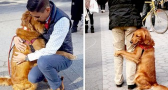 This Golden Retriever cannot help but hug passersby every time the owner takes her for a walk