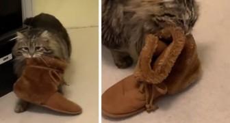 Esta gatinha agradece a mulher que a adotou, levando suas pantufas até a cama todas as manhãs