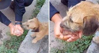 Um policial generoso para o carro e dá água para um cachorro de rua que estava vagando pelas ruas vazias por causa do Covid