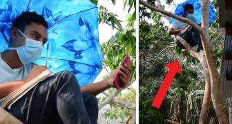 Coronavirus: hij klimt elke dag in een boom om wifi te ontvangen en online de lessen van de universiteit te volgen