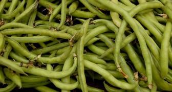 Tuinbonen: rijk aan vezels en eiwitten, ze kunnen de botten versterken en het zenuwstelsel beschermen