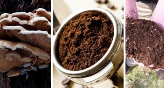 7 trovate insolite ma utili per riciclare i fondi del caffè in casa e in giardino