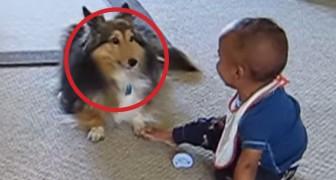 Si vous avez des doutes sur l'importance des chiens dans la croissance des enfants, regardez ça!