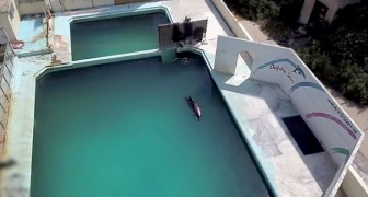 Efter 15 år i fängelse i bassängen på ett akvarium, dör en delfin som lämnats åt ensamheten