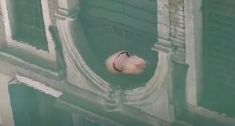 In assenza di gondole e turisti, una medusa gigante vaga indisturbata tra i canali di Venezia