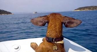 Este video de un perro salchicha en vacaciones en el mar habla claro: no abandonarlos, LLEVENLOS CON USTEDES!