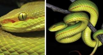 Wetenschappers ontdekken een nieuwe soort slang en noemen het als een personage van Harry Potter