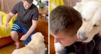 Un Golden Retriever interrompt les exercices à domicile de son maître et se joint à ses entraînements