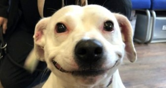 Esta cachorrinha que parece sorrir encontrou um novo lar graças à sua aparência adorável