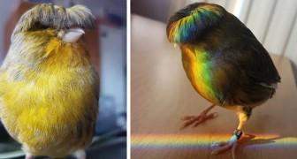 Barry, le canari avec la coupe au bol : son look hilarant fait sourire des milliers d'internautes