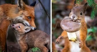 Un fotografo immortala la fauna selvatica delle foreste finlandesi: le sue foto racchiudono un mondo magico