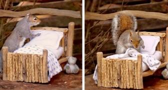 Eine Frau stellt ein hölzernes Minibett für Eichhörnchen her und fotografiert eines, das jede Nacht die Decken und Kissen aufschüttelt