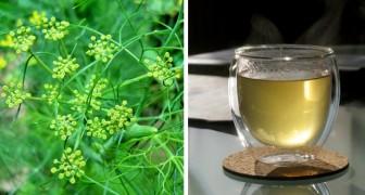 Venkel: rijk aan natuurlijke antioxidanten, deze groente helpt de spijsvertering en neemt het opgeblazen gevoel weg