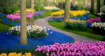 C'est l'un des plus beaux jardins du monde : un photographe l'immortalise dans toute sa beauté pendant le confinement