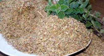 Oregano: een aromatische plant die rijk is aan vitamines, het bevordert de spijsvertering en reguleert de bloeddruk