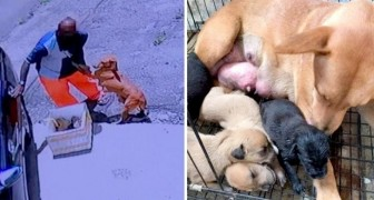 A dog and her newborn puppies were found abandoned on the side of the ride