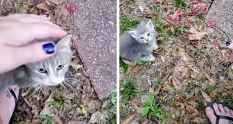 Sie füttert tagelang eine streunende Katze, entdeckt dann aber, dass sie unter ihrem Schuppen 5 Junge zur Welt gebracht hat
