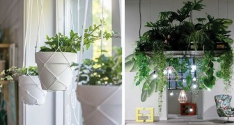 13 idées pour décorer la maison avec des plantes suspendues au plafond