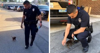 An abandoned puppy asks for help from two officers on the street: they adopt him as a police dog