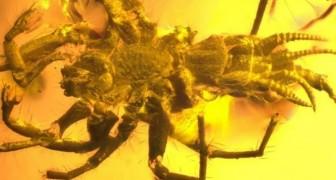 Wissenschaftler finden eine in Bernstein konservierte prähistorische Kreatur: es handelt sich um eine Spinne mit dem Schwanz eines Skorpions