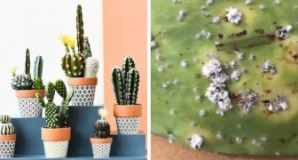 7 dritte utili ed efficaci per prendersi cura al meglio dei cactus in casa