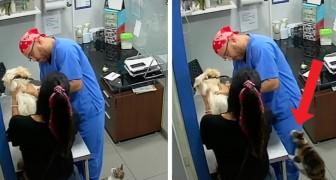 En katt hör en hund gråta hos veterinären och försöker försvara den genom att riva doktorn