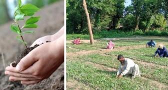 In Pakistan worden degenen die door Covid-19 hun baan hebben verloren, door de staat ingehuurd om bomen te planten