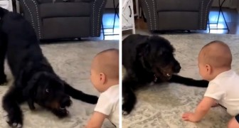 The who dog entertains a baby of a few months, with kisses and laughter: the mother manages to capture this special moment
