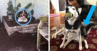 13 hilarische foto's van honden die de verwachtingen van hun baasje hebben teleurgesteld, maar hem wel een glimlach hebben gegeven